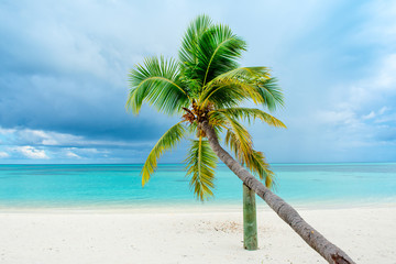 Fallen palm tree on a sandy beach along the turquoise ocean