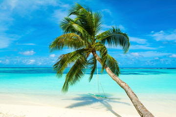 Tropical landscape with swings in the palm tree on the shores of Indian Ocean