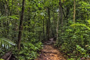 Walking trail in Thai dark tropical forest, Mu Koh Chang National Park, Chang island, Thailand. Path to the Khlong Phlu waterfall