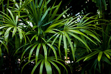 leaves of tropical trees