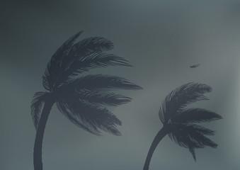 tornade - cyclone - tempête - catastrophe naturelle - palmier - phénomène météo