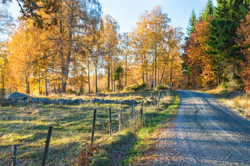 Dirt road along a meadow with autumn colors