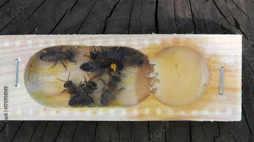 Wall mural The bee-queen in the shipping box.