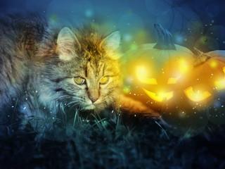 Cat with halloween pumpkins