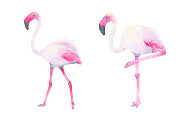 Watercolor hand painted tropical pink flamingo isolated on white background