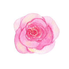 Watercolor hand painted flower pink rose isolated on white background