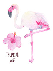 Watercolor hand painted tropical pink flamingo and hibiscus flower isolated on white background