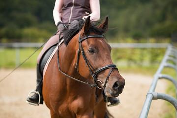 Aufmerksames Pferd