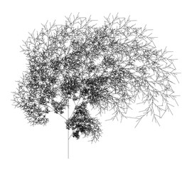 Flat Vector Computer Generated  L-system Fractal Plant - Generative Art