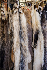 Badger skins hanging in the market for sale- vintage market concept