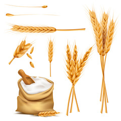 Bunch of wheat ears, dried grains, flour in burlap sack with wooden shovel realistic vector illustration set isolated on white background. Cereals harvesting, bakery products producing design elements