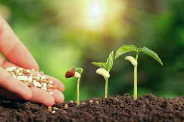 Agricultural hand nurturing fertilizer plant growing step on soil in garden
