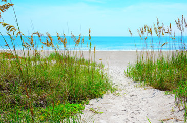 Canvas Prints Beach Sandy sand path through tropical sea oats down to a beautiful calm blue ocean beach on a sunny afternoon.