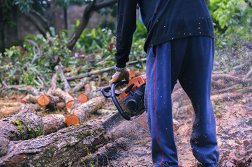 Men use saws to cut branches