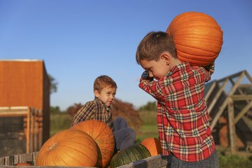 boy carrying pumpkins. children picking pumpkins in a cart. farm scene. Copy space for your text