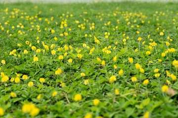 Yellow flower with green leaf background