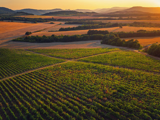 Beautiful Sunset over vineyard fields in Europe