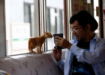 Man take a picture of a cat in a train cat cafe that brings awareness to stray cat culling in Ogaki