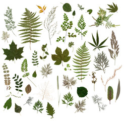 Herbarium - Collection of Dried Leaves