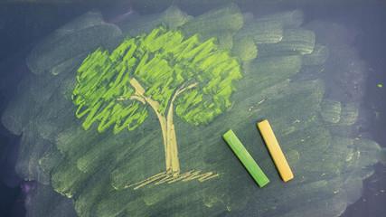 draw a tree picture by chalk pastels on a school blackboard.