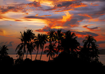Sunset Beach with palm trees and beautiful sky.