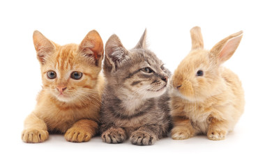 Kittens and rabbit.