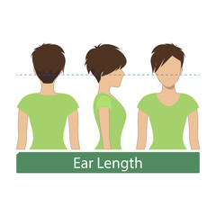 Hair length for haircuts and hairstyles - ear length. Vector.