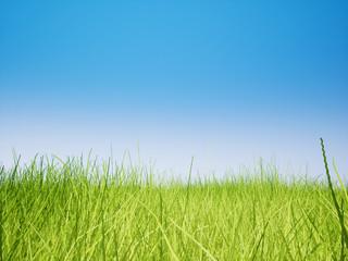 Landscape meadow grass field 3D render