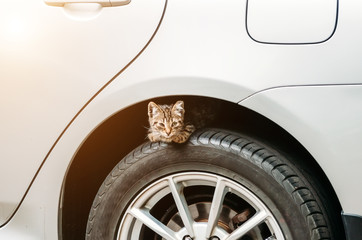 A small kitten sits on the wheel of a car