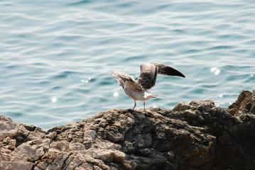 Möven und Enten am Mittelmeer