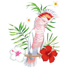 Wall Mural - Parrot ara with tropical plants and flowers white background