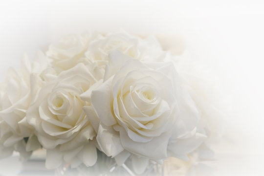 White roses bouquet surrounded by white light.