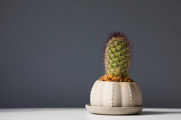 Small cactus on a gray background