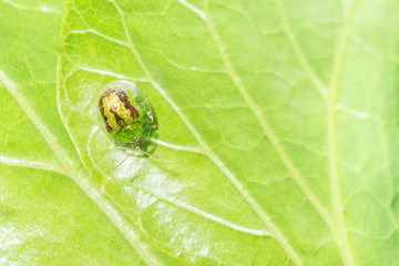 Yellow ladybug on leaf