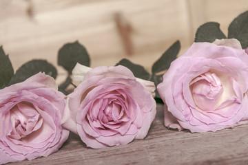 Rosen pink, vor Holz