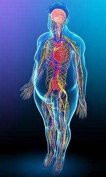 Illustration of male nervous system functioning on blue background