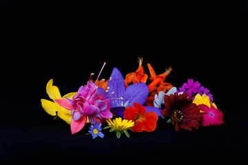 Many flowers of different species and colors on black background.