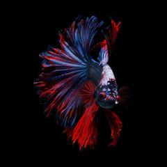 Foto op Plexiglas Vissen Joker