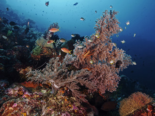 Fishes and corals in the tropical sea