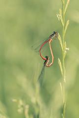 Intimité acrobatique