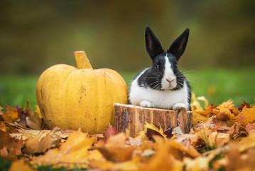 Little rabbit with pumpkin in autumn