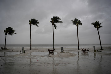 Palm trees sway as the wind blows and water rises at an evacuated recreational vehicle park as hurricane Irma approaches Fort Myers Beach