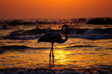White flamingo on the sunset on the beach. Beautiful sunset under the sea.