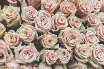 Rose backgrounds for valentine day or another celebration