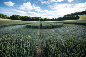 In de dag UFO Crop circle at East Kennett, Wiltshire, England, viewed at ground level
