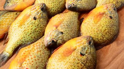 flier fish pictures