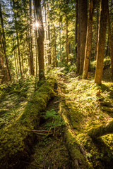 The magical feel you get from an old growth forest in the North Cascades National Park in Washington state.
