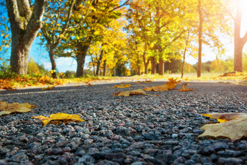 Wall Mural - Leaves on the road. Beautiful autumn background