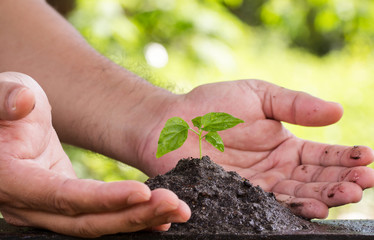The hands of the seedlings on the soil Blurred Background Bokeh nature Nature and Environment Conservation Concepts