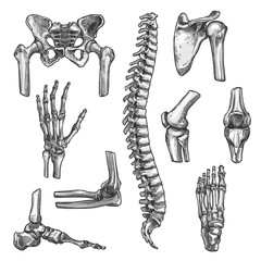 Bone and joint sketches set for medicine design